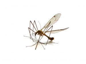 myg-myggestik-myggen