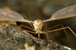 myg-myggestik-husråd
